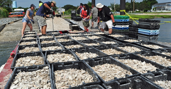 People loading bins filled with broken clam shells onto a barge
