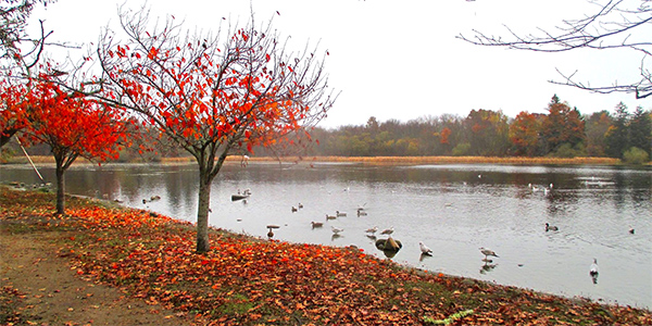 Fall foliage by the pond at Buttonwood Park