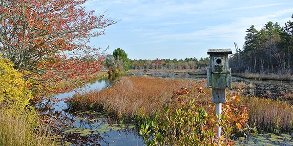 cranberry bog at White Eagle Property