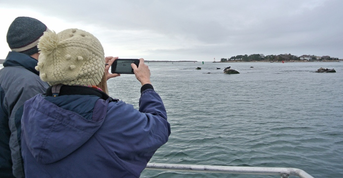 people capture photos of seals in Woods Hole with their phones on a Buzzards Bay Coalition seal watch